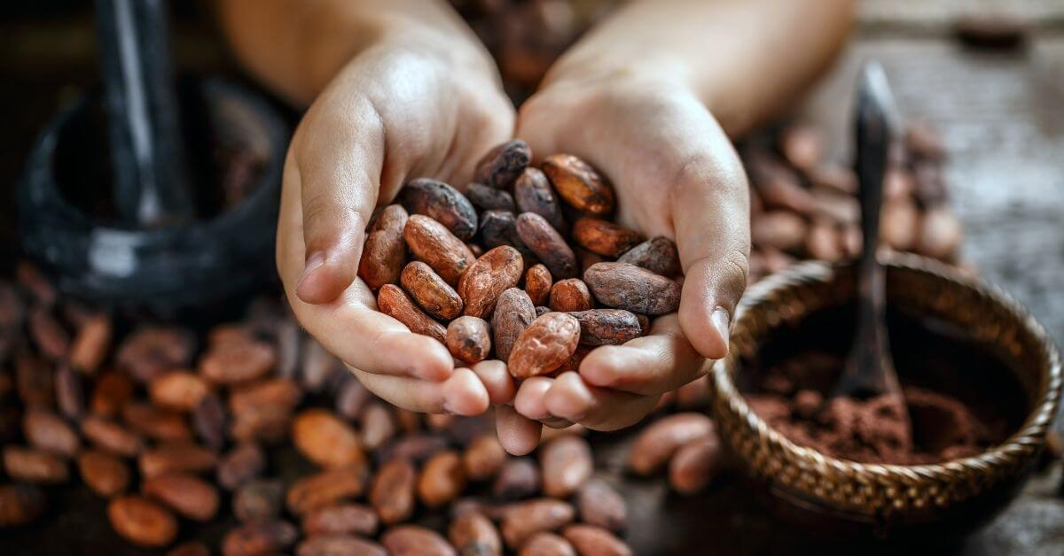 dried cocoa beans on hand